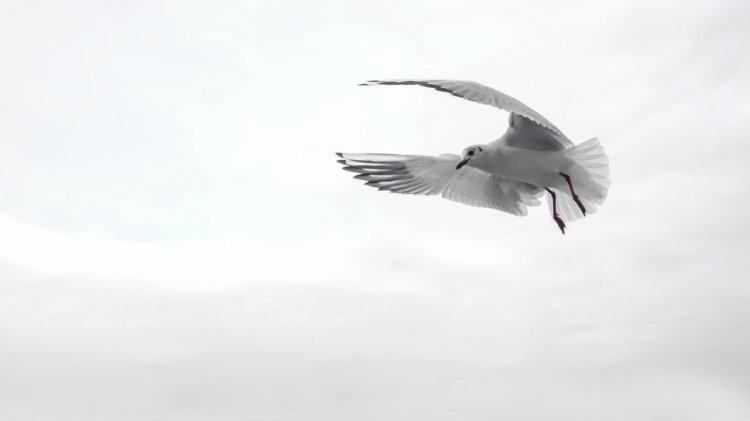 Symbolbild: Freiheit. Möve vor wolkigem Himmel