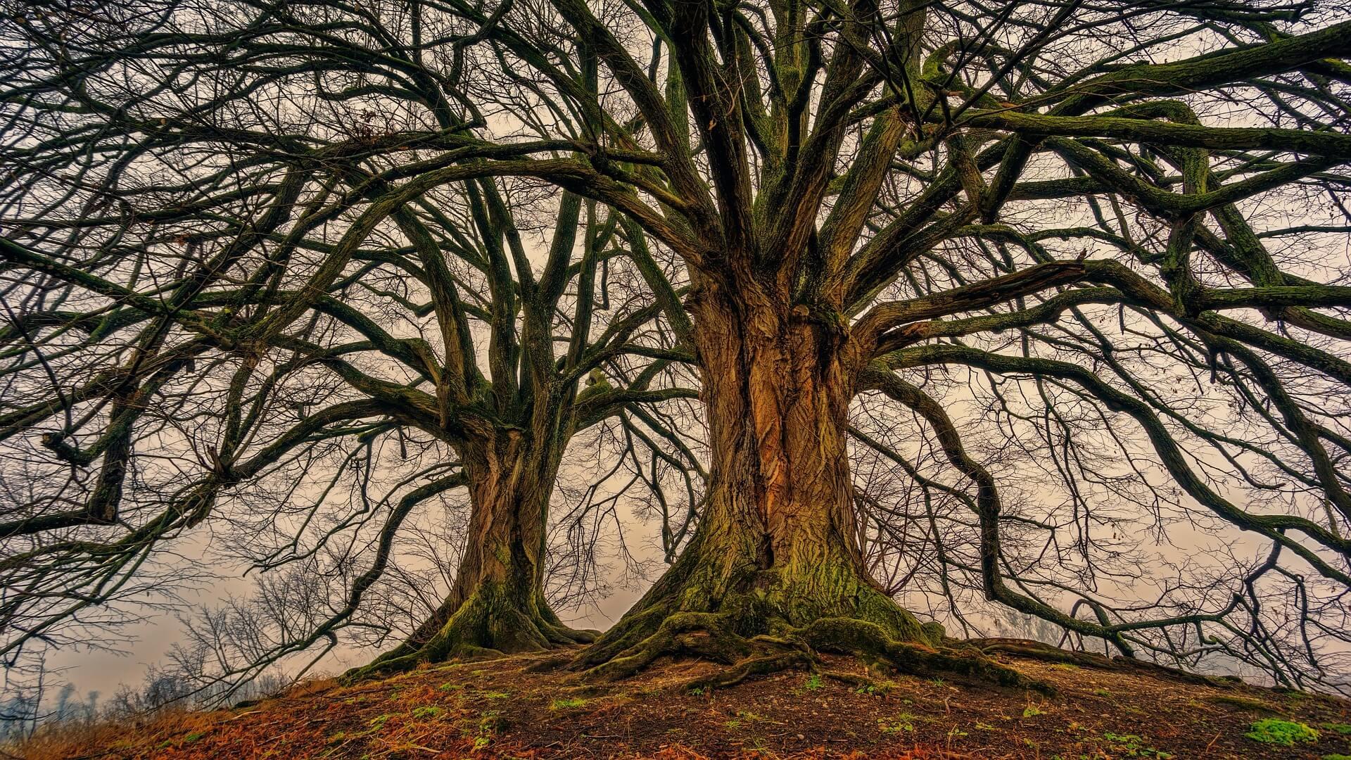 """Baum mit Ästen. Symbolbild zum Thema """"gehorchen"""""""