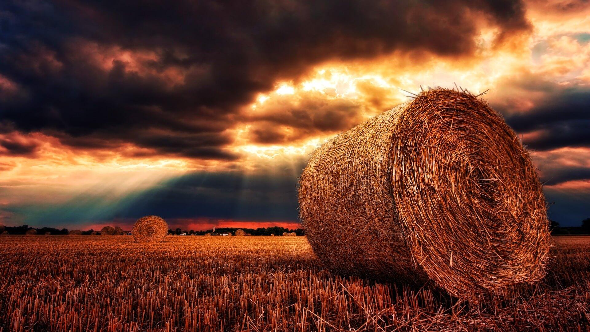 Strohballen, überstrahlt von Sonne: Symbolbild für den Tag der grundlosen Nettigkeiten