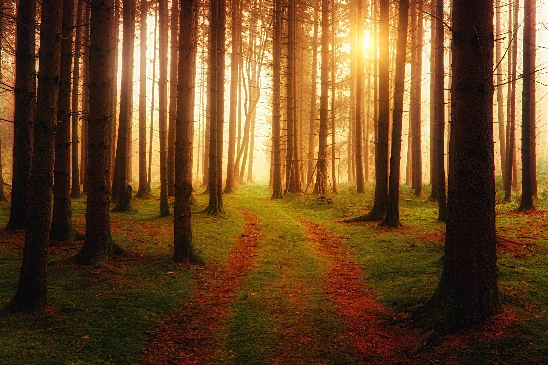 Straße im Wald: Symbolbild für den plan Gottes