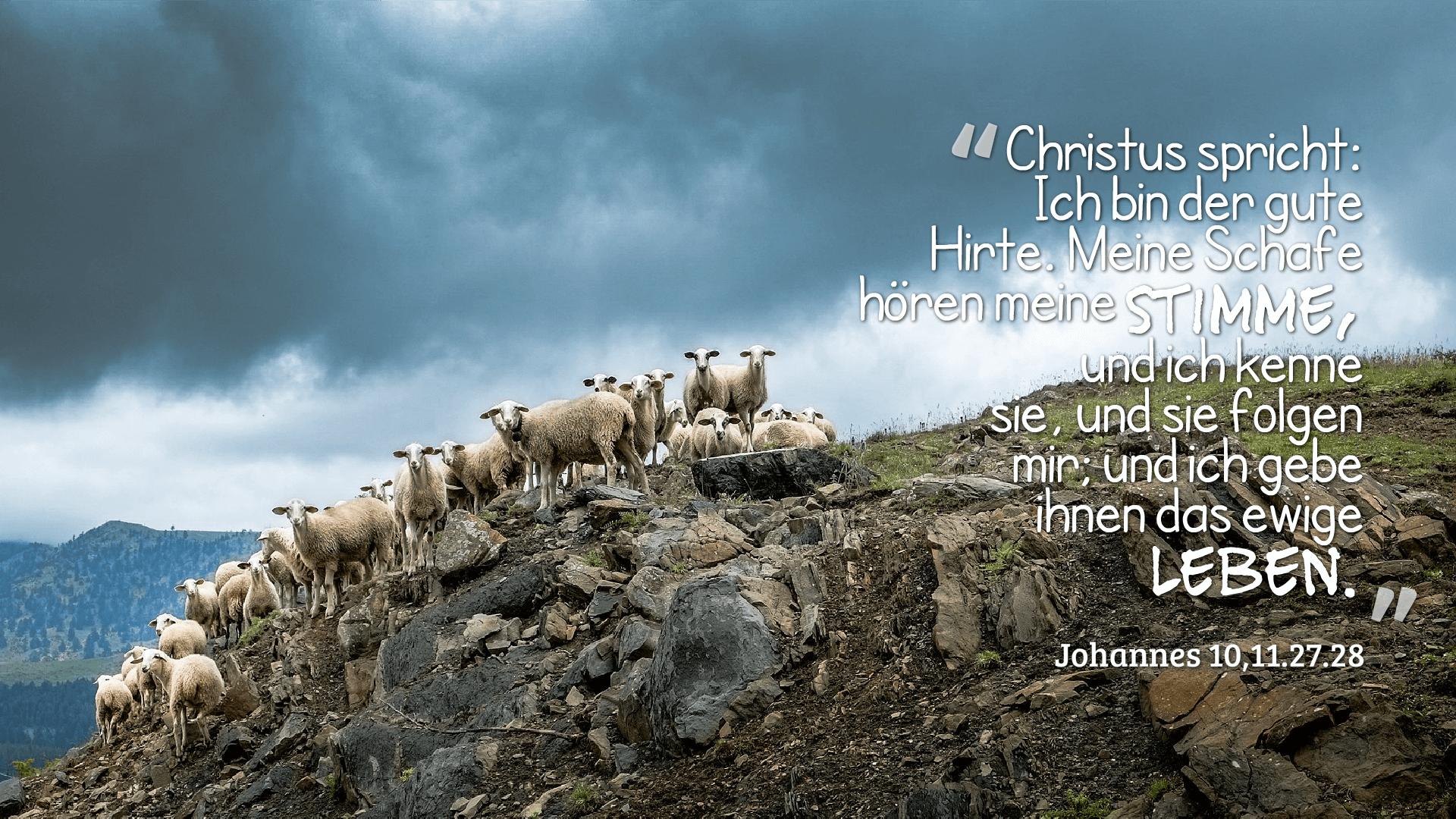 Christus spricht: Ich bin der gute Hirte. Meine Schafe hören meine Stimme, und ich kenne sie, und sie folgen mir; und ich gebe ihnen das ewige Leben. - Johannes 10,11.27.28